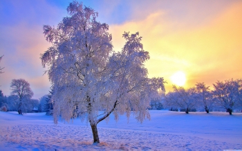 winter evening light-wallpaper-5120x3200